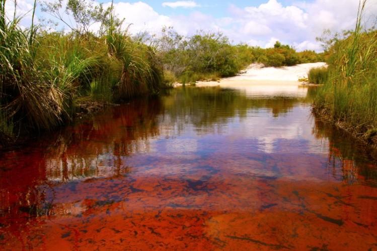 オーストラリア 赤い迷い道