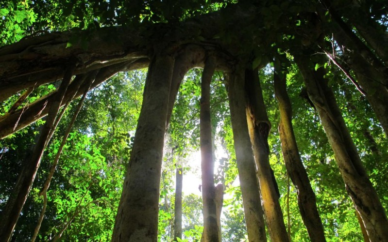 マヤ文明 ユカタン半島 エルミラドール遺跡